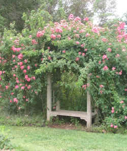Garden_seat_arbor_pink_roses_small